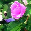 Bumble Bee Flying Away  by Debra Lynch