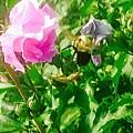 Bumble Bee In Mid Flight by Debra Lynch
