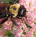 Bumble Bee Macro by Angela Rath