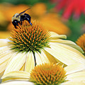 Bumble Bee On Top by Steve Gass
