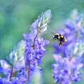 Bumblebee And Lupine by Priska Wettstein