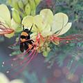 Bumblebee Before Dawn 2 by Arin Gaudet Roberts