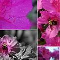 Bumblebee Bonanza by Priscilla Richardson