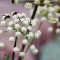 Bumblebee Gang by Matthew Justis