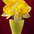 Bunch Of Daffodils by Garry Gay