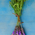 Bunch Of Lavender by Anastasy Yarmolovich