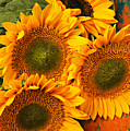Bunch Of Sunflowers by Garry Gay
