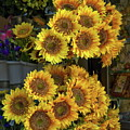 Bunches Of Sunflowers by Sally Weigand