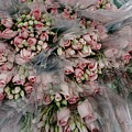 Bundles Of Pink Roses Are Gathered by Sisse Brimberg