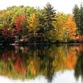 Bunganut Lake Maine Foliage 10 2016 by Lynne Miller