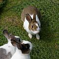 Bunnies by Lisa Hebert