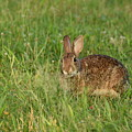 Bunny At Breakfast by Joan D Squared Photography