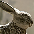 Bunny by Christopher Holmes