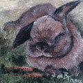 Bunny Dreams by Brenda Thour