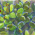Bunny Ear Cactus by Judith Kunzle