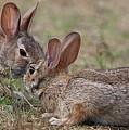 Bunny Encounter by Linda Crockett
