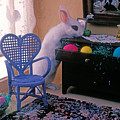 Bunny In Small Room by Garry Gay