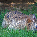 Bunny In The Backyard by Maria Keady