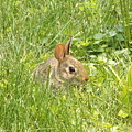 Bunny In The Grass by Erick Schmidt