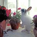 Bunny In Window by Garry Gay