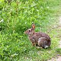 Bunny Rabbit by Robert Popa