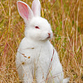 Bunny by Randall Ingalls