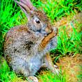 Bunny Secrets by LeeAnn McLaneGoetz McLaneGoetzStudioLLCcom