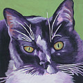 Tuxedo Black And White Cat by Robyn Saunders