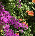 Burgazada Island Flower Color by Bob Phillips