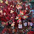Burgundy Succulents. Multi Color Beauty by Sofia Metal Queen