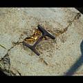 Buried Metal 3 by Tamara Kulish
