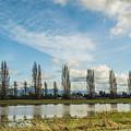 Burlington Fields  by Stephen Coletta