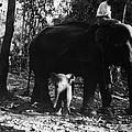 Burma: Elephants, 1960 by Granger