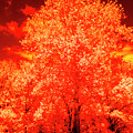 Burning Bush by Paul W Faust - Impressions of Light