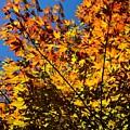 Burning Colours by Hideaki Sakurai