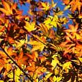 Burning Colours Ll by Hideaki Sakurai