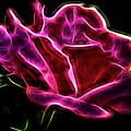 Burning Rose by Carolyn Truchon