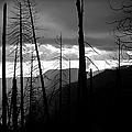 Burnt Forest - Yosemite by Charmian Vistaunet