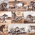 Burros Of The South West Sampler by Linda L Martin