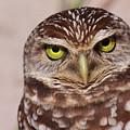 Burrowing Owl by Bruce J Robinson