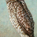 Burrowing Owl by James W Johnson