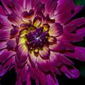 Burst Of Purple by Mark Wiley