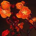Bursting Into Bloom by Merton Allen