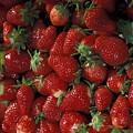 Bushel Of Strawberries by PhotographyAssociates
