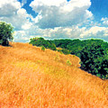 Bushes On A Hill Ae by Lyle Crump