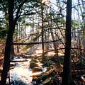 Bushkill Falls by Pamela Parsons