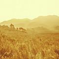 Bushland Of Western Dynamics by Jorgo Photography - Wall Art Gallery