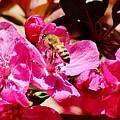 Busy As A Bee 031015 by Edward Dobosh