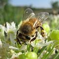 Busy Bee 5 by Rebecca Shupp