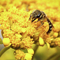 Busy Bee by Dawn Currie